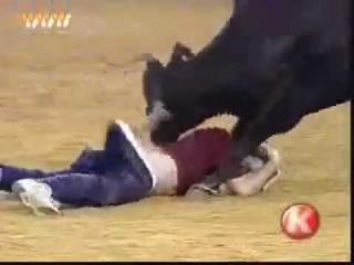 Коррида, бык раздевает мужика и чуть не рвет ему жпу