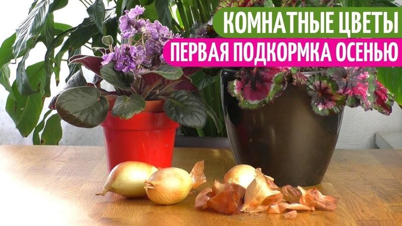 Мои КОМНАТНЫЕ ЦВЕТЫ Любят Такую ПОДКОРМКУ И ЗАЩИТУ От Вредителей. Мои цветы. Мой опыт.