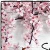 Sakura Cleaning
