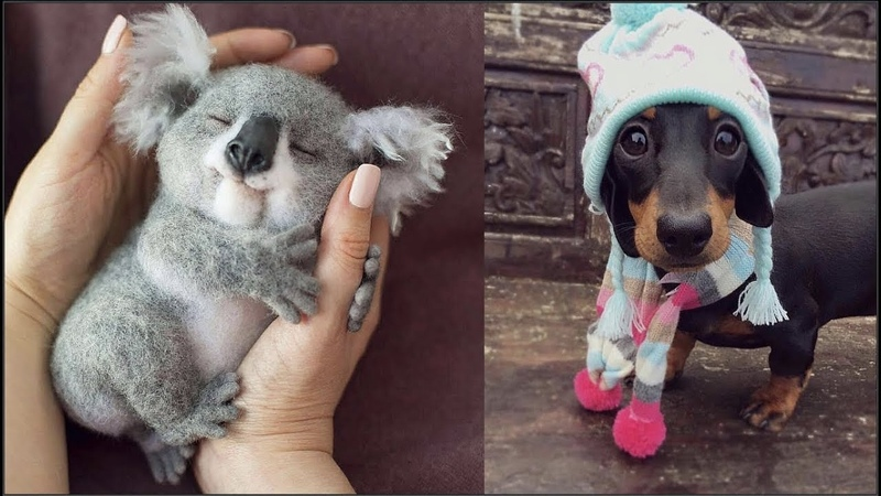Cute baby animals Videos Compilation cute moment of the animals - Cutest Animals 1