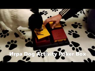 Игра dog activity poker box