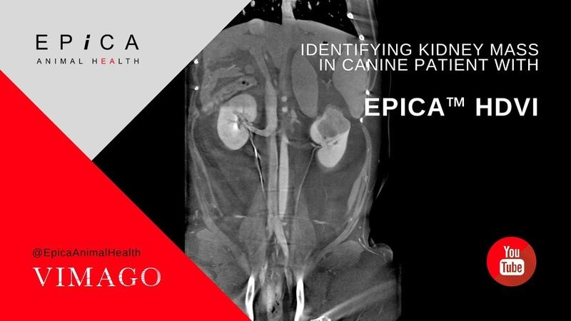Обнаружение новообразования почки у собаки с помощью КТ Identifying Kidney Mass in Canine patient with Epica HDVI