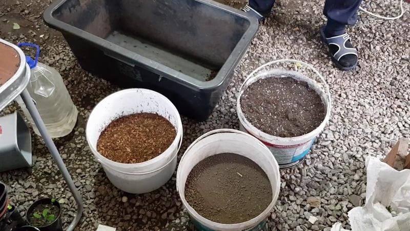 Подготовка грунта для пеларгонии часть 1