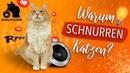 🔥Wie und warum schnurren Katzen? UNGLAUBLICHER NEBENEFFEKT Katze schnurrt nicht, was tun?