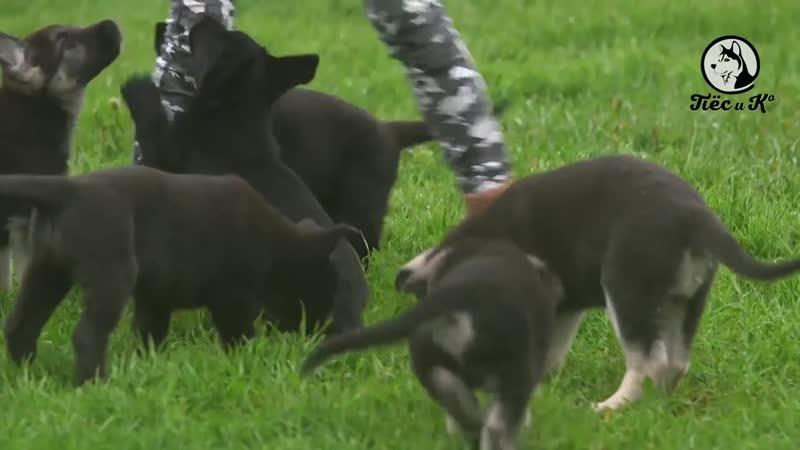 Собачья работа Пес и Ко Защитно караульная служба