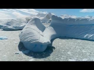 7f_Seven.Worlds.One.Planet.S01E01.Antarctica.WEB-DL.1080p.FocusX.a1.18.11.19