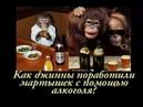 Как джинны поработили мартышек с помощью алкоголя Лучшая притча про алкоголь и привычки