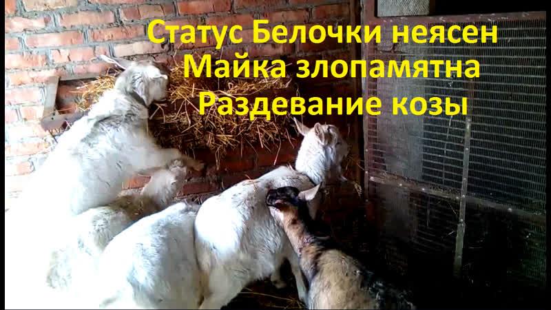 Статус Белочки неясен Майка злопамятна Раздевание козы
