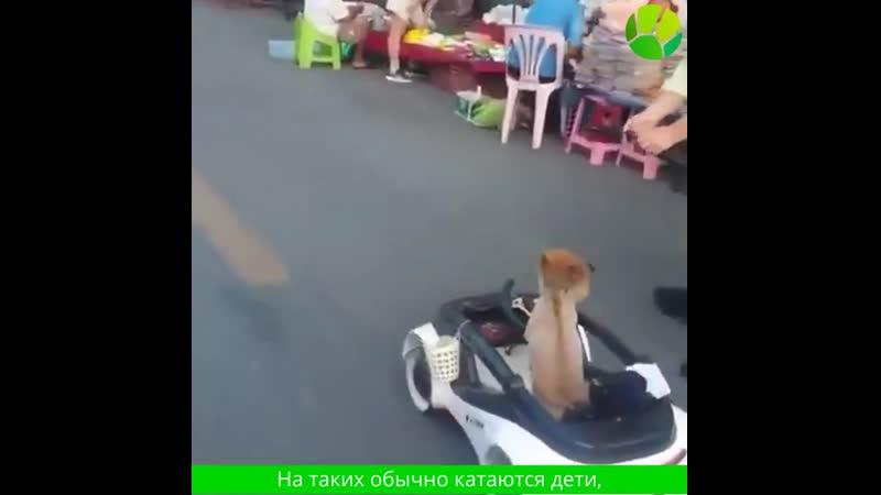 Собака осматривает рынок