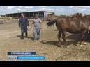 Ставропольские ветеринары справляют новоселье