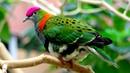 চমৎকার ১০ কবুতর Top 10 Most Beautiful Pigeons Colorful Birds Part 2 Stunningly Beautiful Birds