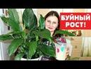БЕСПЛАТНАЯ ПОДКОРМКА для БЕШЕНОГО РОСТА комнатных растений