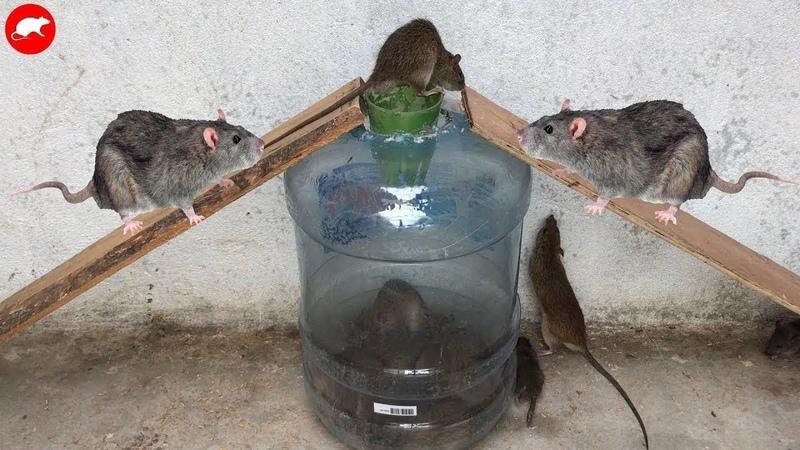 Мышь Ловушка Крысы Самодельная Мышь Ловушка Автоматическая Крыса