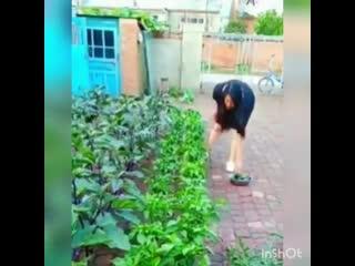 Интересный способ выращивания