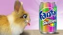 Кролик БАФФИ и ФАНТА СКИТЛС! СПИННЕР кролика БАФФИ ! Коктейли в домашних условиях Коктейли для детей