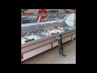 Turkish man feeds cat that walks in butcher shop every day