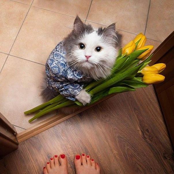 известно котенок дарит цветы фото изменить запрос или