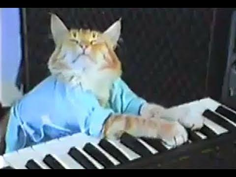 Charlie Schmidts Keyboard Cat! - THE ORIGINAL!