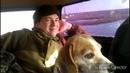 Охота на лисицу с гончими и ягдом в Крыму Лисицу взяли fox and wolf hunting in Crimea Russia