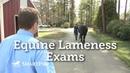 Equine Lameness Exams