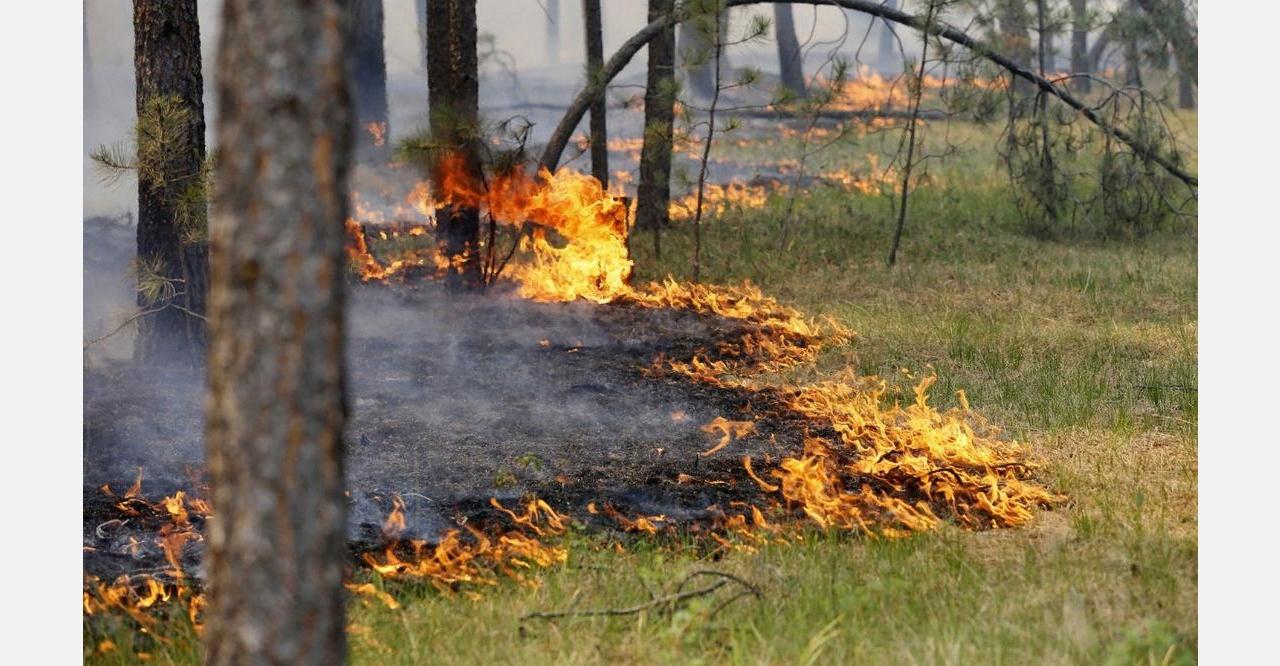 Экологическая тропа  «ИВИНСКАЯ» - дорога в «ЛЕС БУДУЩЕГО». Лесные пожары