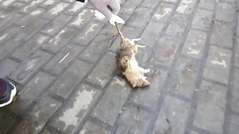 Крысяка задавленного с наберержной поднял. Похоронил по человечески.