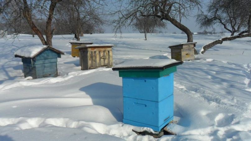 Пасека зимой / ©vashapaseka.blogspot.com