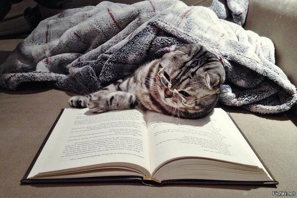 КНИГОМАНИЯ Уютно укрывшись под пледом,Читаю книгу за завтраком и обедом.А на ужин беру интересный журнал,И удаляюсь в полнейший астрал.