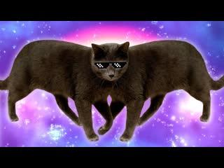 Смешные коты | Подборка за неделю #3 | Котопятница