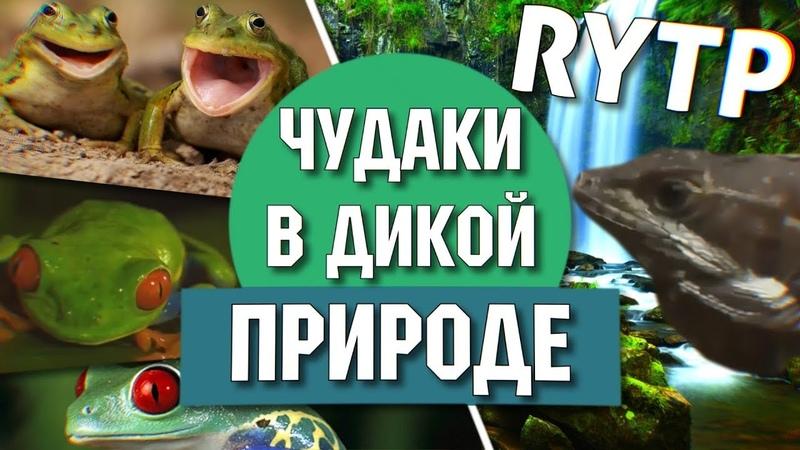 Чудаки в дикой природе | RYTP Collab