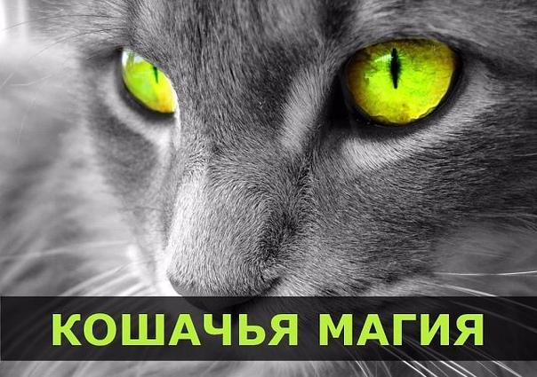 ПРИМЕТЫ И ПОВЕРЬЯ ПРО КОШКУ.   Кошка - удивительное...