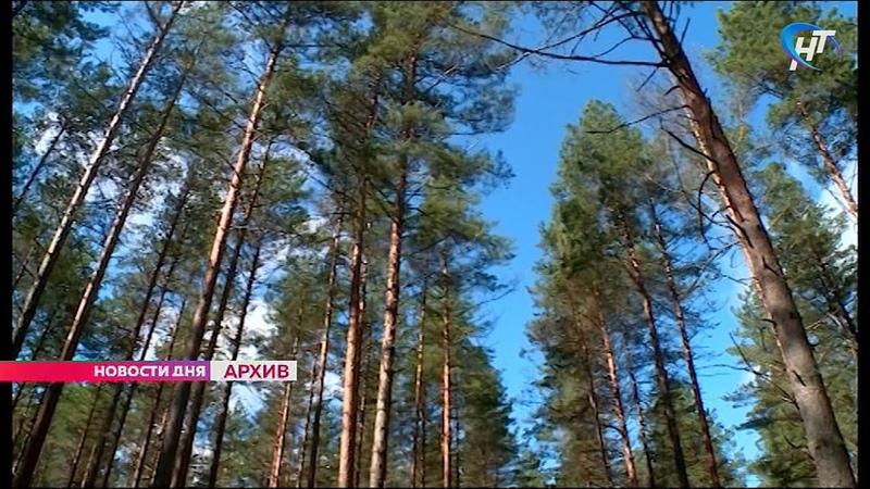 Новгородская прокуратура признала законным возбуждение уголовного дела о превышении должностных полн