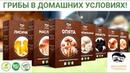 Набор для выращивания грибов Домашняя грибница. Грибница в коробке