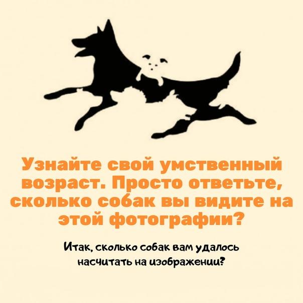 регулярно размещает сколько собак на картинке один