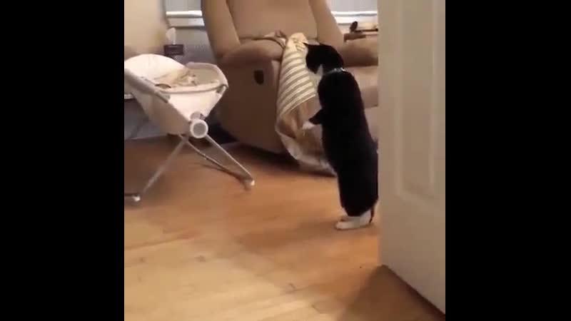 кто это там шевелится......