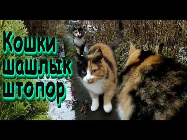 Разноцветные кошки Закрытие сезона Место гибели ведьмы Обзор штопора