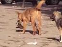 прикол собаки на южном рынке 2