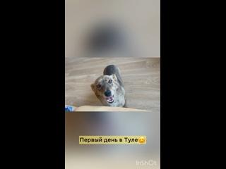 Viktoriya Ivçenkotan video