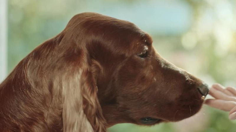 Бравекто – капли и таблетки от блох и клещей для кошек и собак
