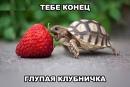 Персональный фотоальбом Ксении Кузьминой
