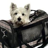 Товары и услуги для собак
