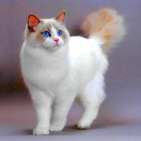 Фотография профиля Софьи Лобашовой ВКонтакте