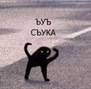Фотоальбом Nikolay Kotov