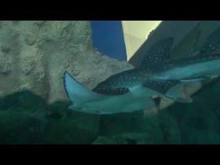 Океанариум в Москве Москвариум Дельфинарий на ВДНХ