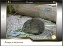 В мире животных с Николаем Дроздовым от 2011.02.26 Выпуск 19