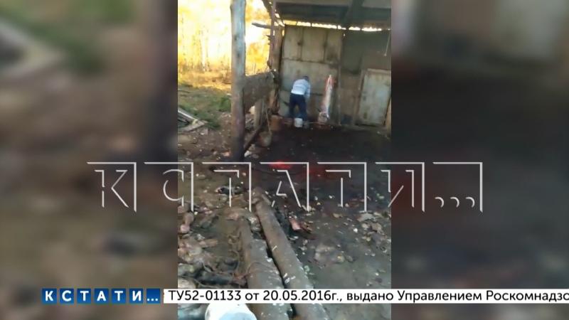 Нелегальная скотобойня затапливает деревню кровью и останками животных