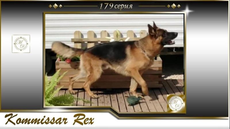 Komissar Rex 16x07 Комиссар Рекс 179 серия