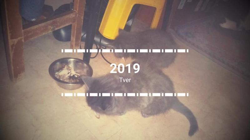 Котик метис мейн-кун