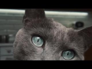 Реклама кошачьего корма Sheba Шебу дай мне 2020