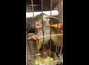 Основы правильного питания обезьянок